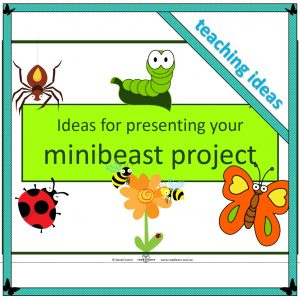 suggestions for displaying minibeast research projects