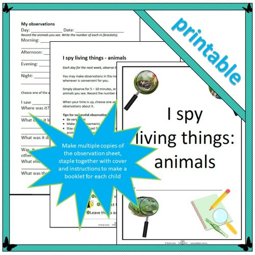 I spy living things – animals